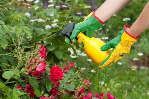 バラ スプレー 殺虫剤