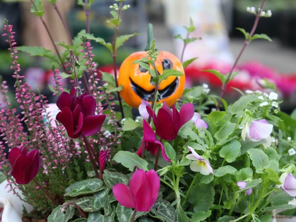 秋の花 寄せ植え