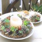 hanaの植物あそび 多肉植物 簡単DIY