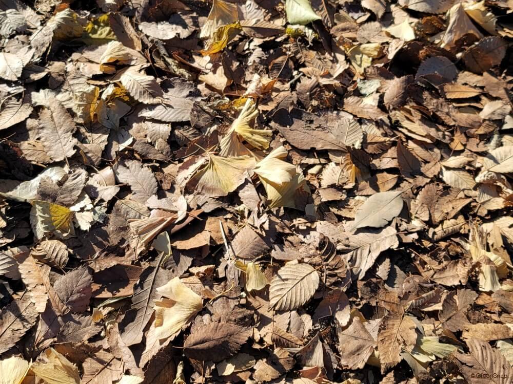 枯葉 落ち葉