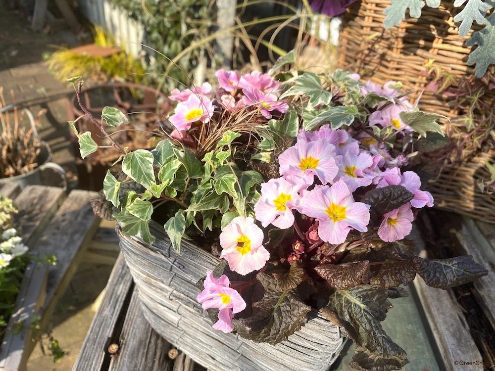花 草花 寄せ植え