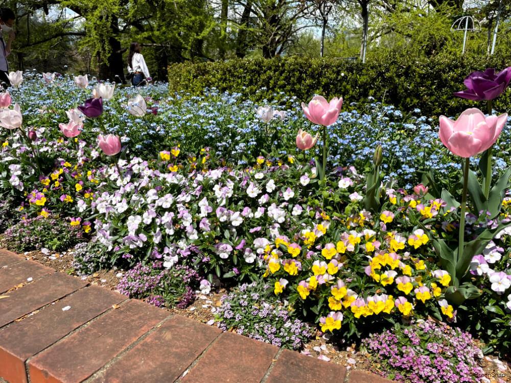 春の寄せ植え レンガ花壇 パンジー・チューリップ