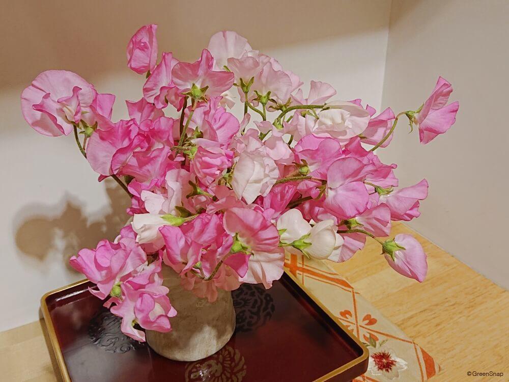 スイートピー 花瓶