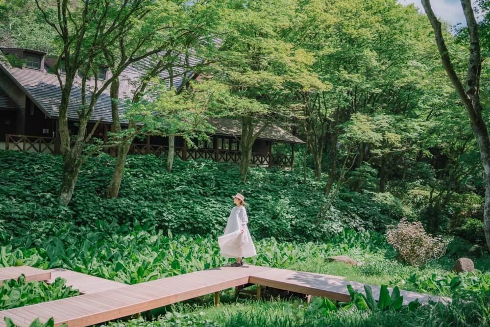 六甲高山植物園 湿生植物区