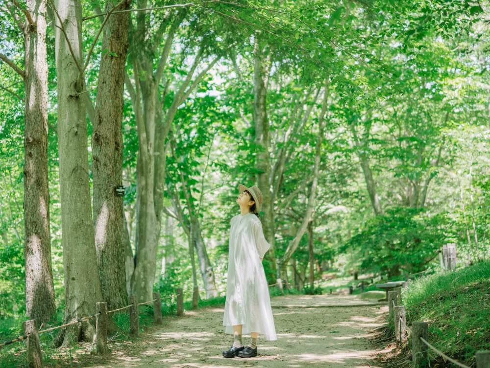 六甲高山植物園 樹林区