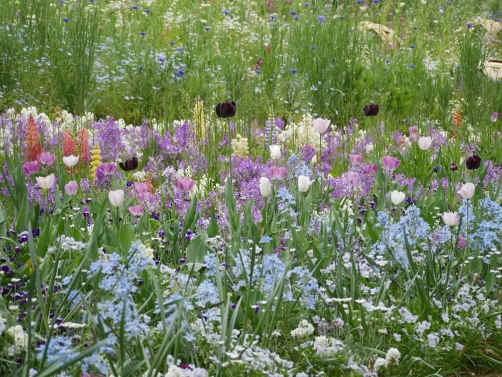 から 咲く まで 花 秋 春 花が咲く低木15選|お庭に彩りを添えるお手頃サイズの庭木