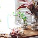 hanaの植物遊び 簡単DIY