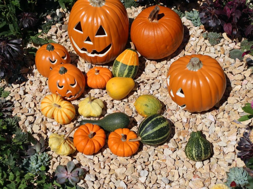 カボチャ かぼちゃ