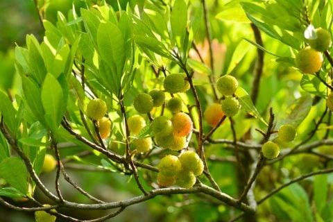 ランキング 庭木